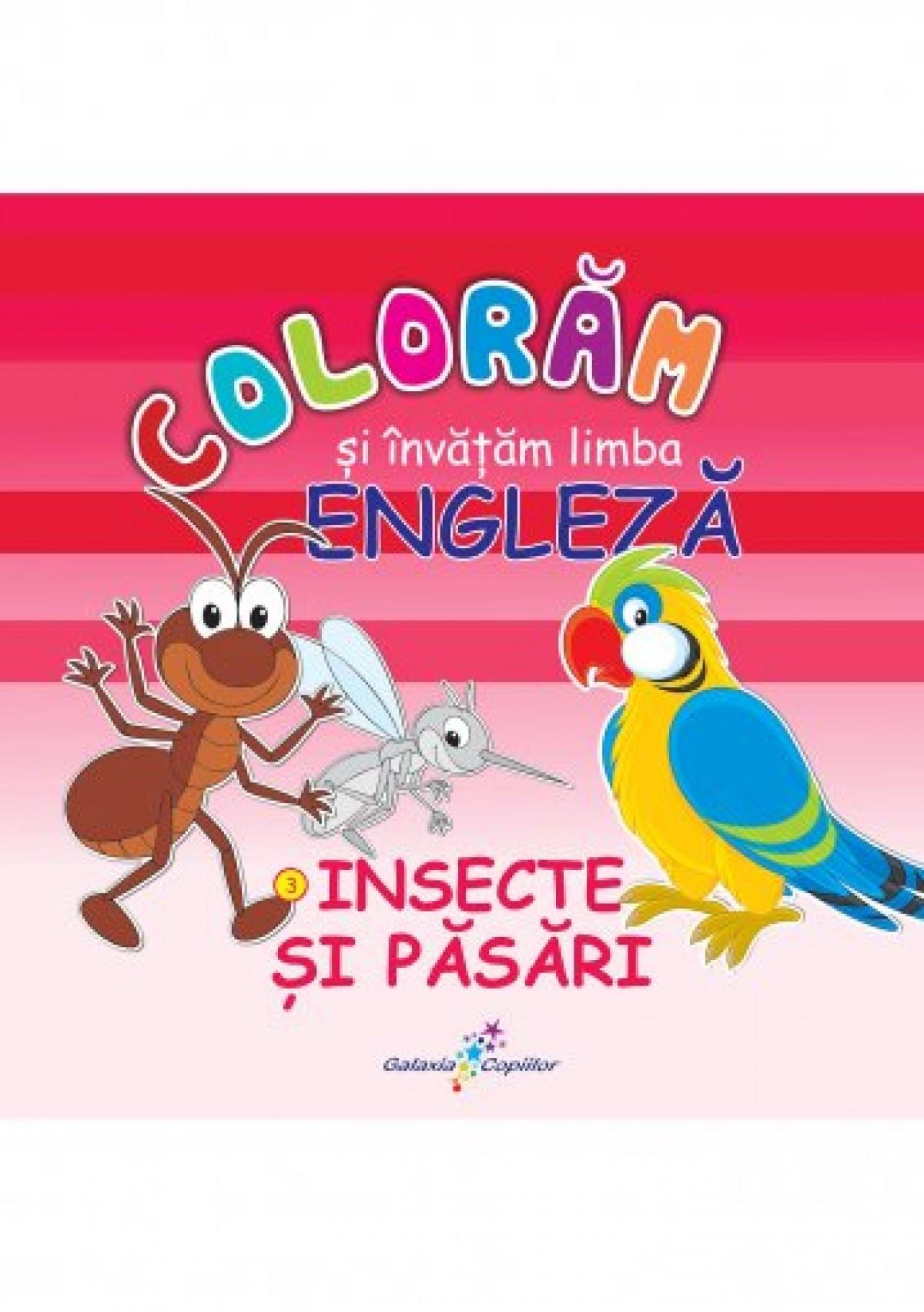 Colorăm și învățăm limba engleză –  3. INSECTE ŞI PĂSĂRI