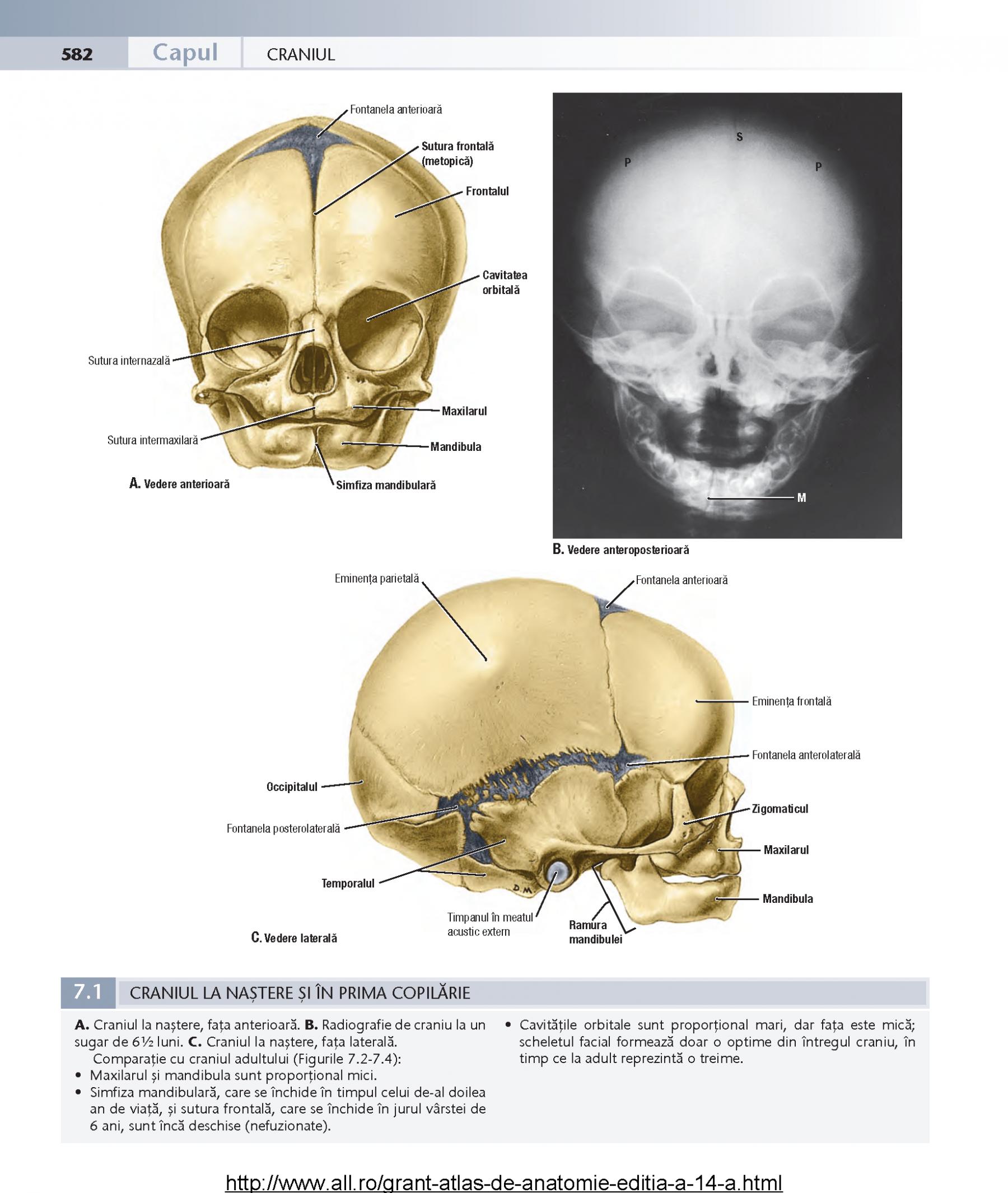Nett Chirurgische Anatomie Der Nase Bilder - Anatomie Von ...