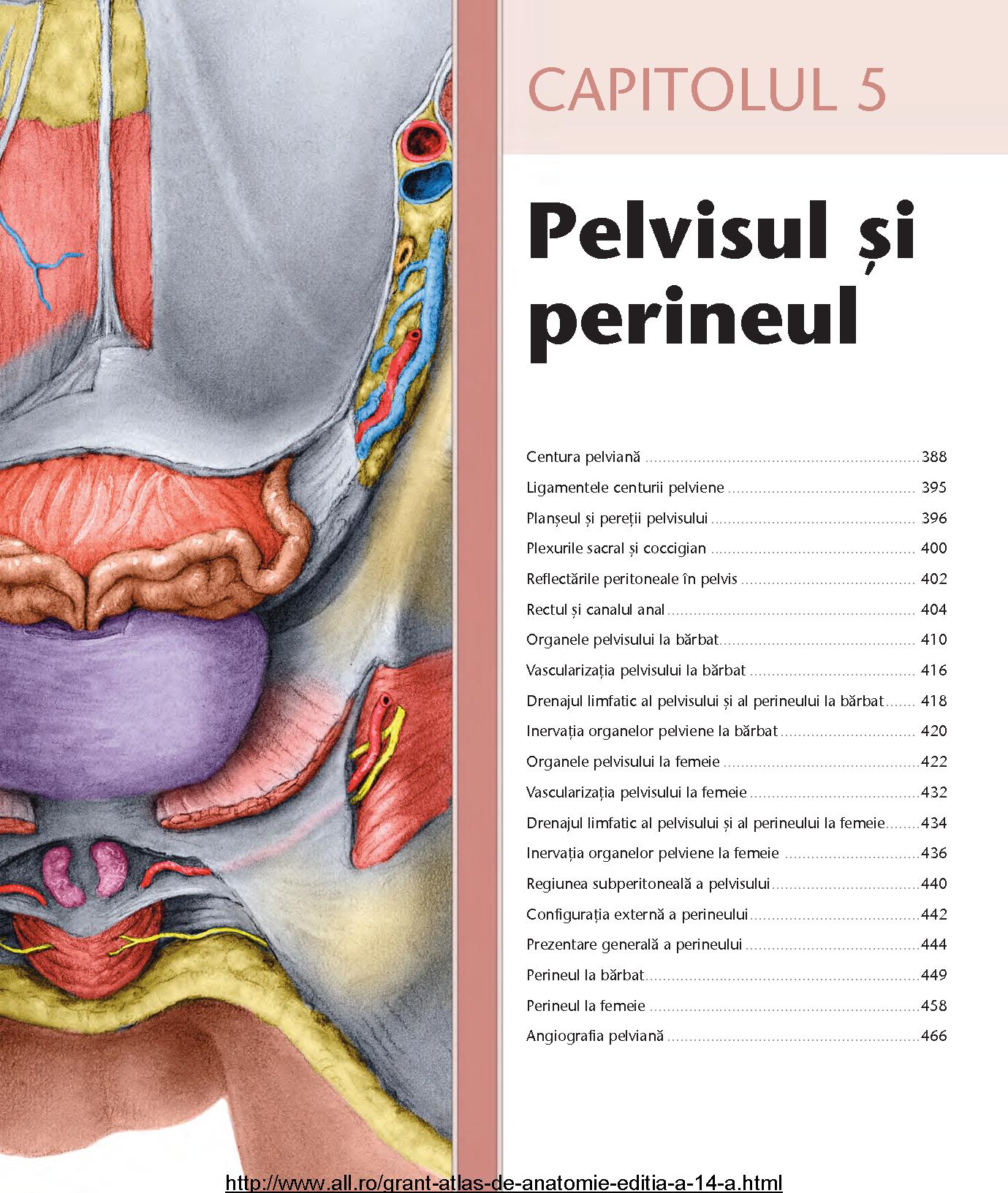 Groß Menschliche Anatomie Reale Abbildungen Bilder - Anatomie Ideen ...